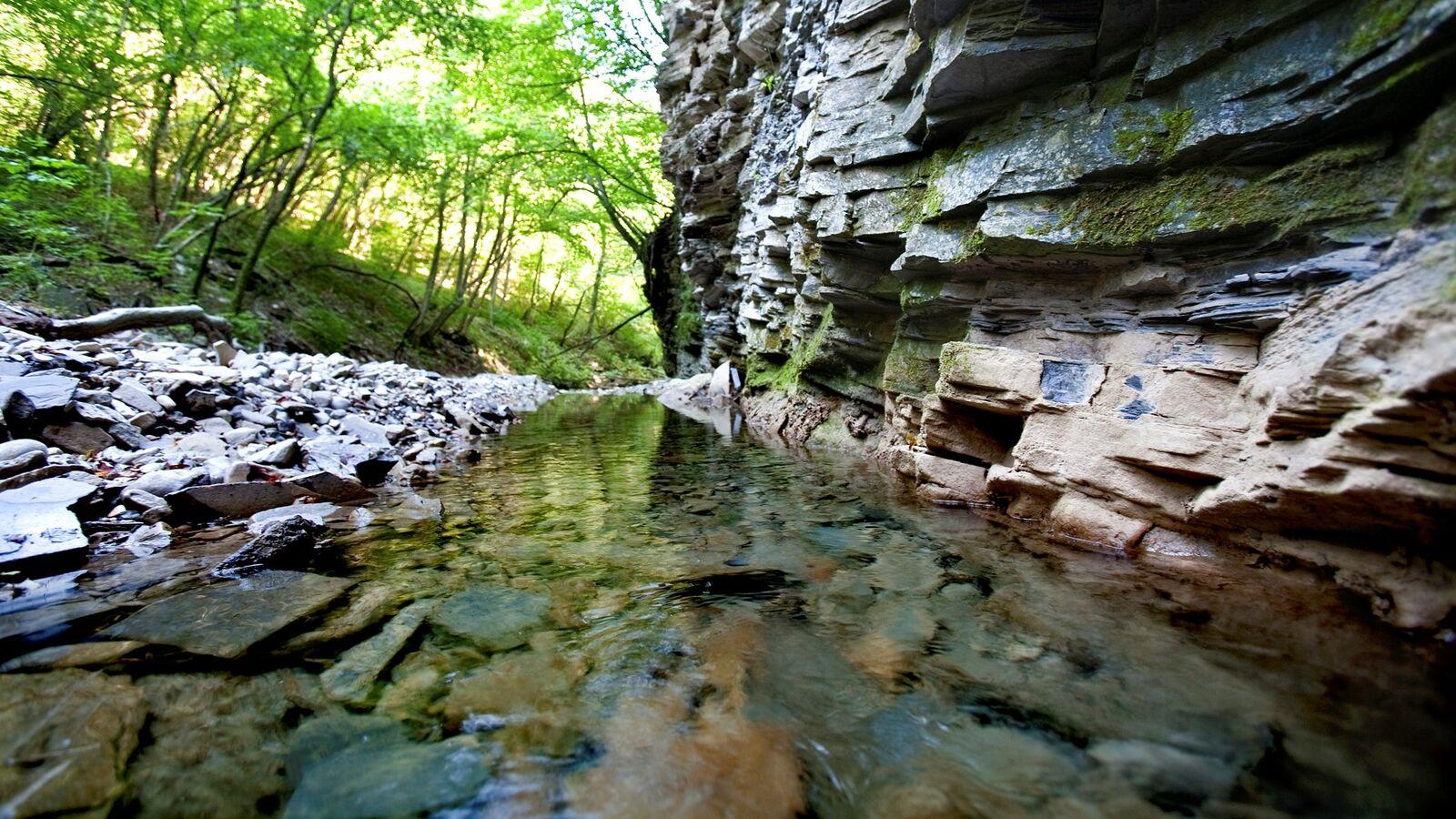 Le rocce del Monte San Giorgio